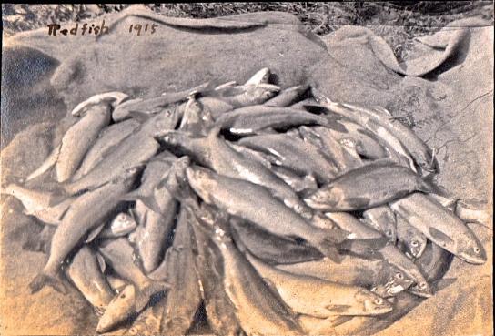 Redfish 1915, Nakusp Museum